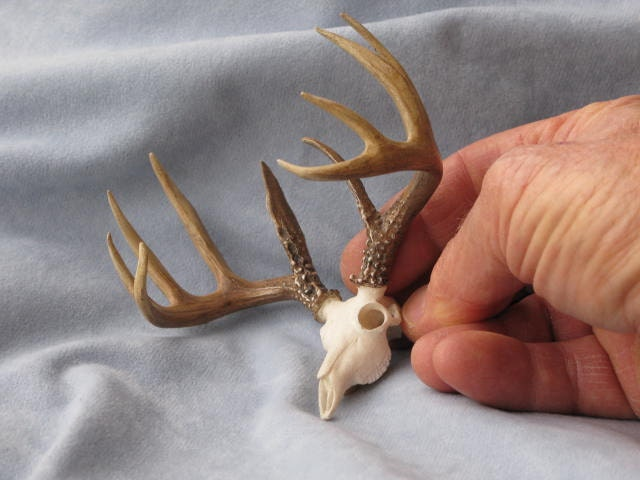 Antlers And Skull Whitetail Deer Miniature Trophy Dollhouse