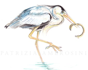 Original 10X8 Watercolour heron.. Not a print ..original painting heron egret bird fish