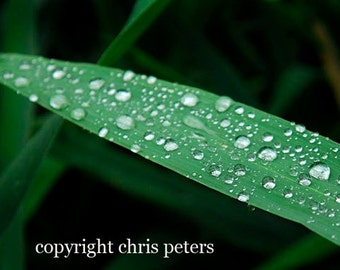 photo note card, rain drops on green grass, free shipping, chris peters, mementos of the journey