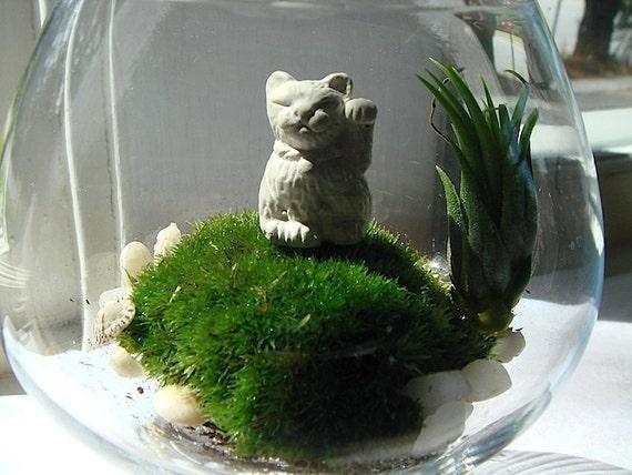 Sweet Mini Lucky Cat Maneki Neko Moss Air Plant Terrarium
