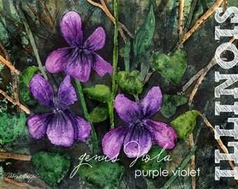 Illinois, Watercolor ACEO, State Flowers,  Purple Violet, genus viola