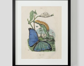 Butterfly Plate 389