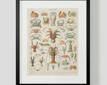 Vintage French Print of Crustaceans, Lobster, Crab, Crawfish