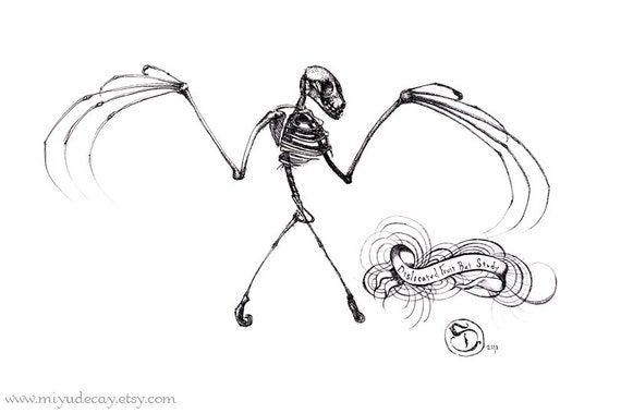 Fruit Bat Skeleton Study giclee print, limited edition of 32