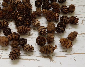 SEASONAL ITEM - Natural Pine Cones, Mini Pine Cones, 100 TINY Pine Cones, Wooden Pine Cones