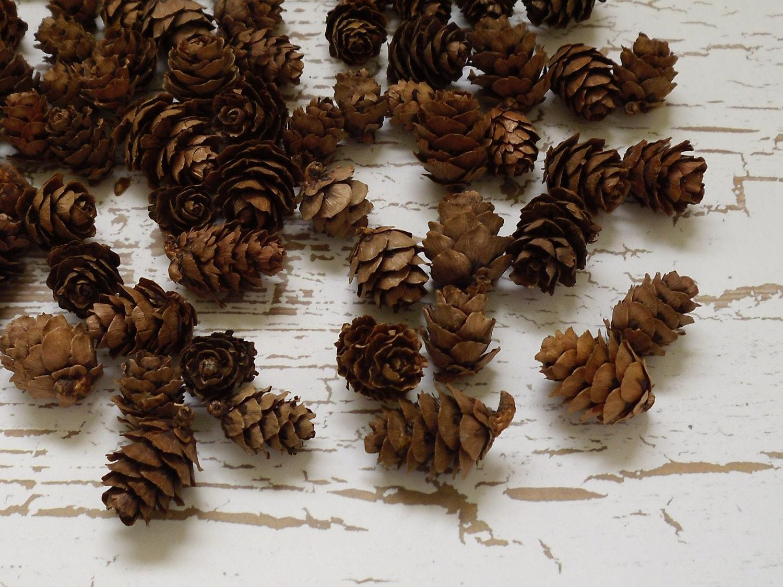 Seasonal item natural pine cones mini pine cones 100 for Small pine cone crafts