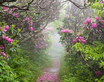 Photograph - Rhododendron Time In the Carolina Mountains