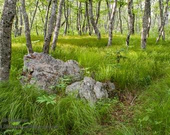 Photograph Blue Ridge Parkway Mountain Meadow