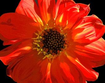 Flower, Orange, Macro, Botanical, Orange and Black, Watercolor, Fine Art Photography, Print, Bright, Bold  (6 Sizes)