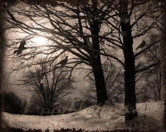 The Winter Crows - Original Photograph - Dark Grey Sepia Snow Trees Landscape Gothic Crow Black Bird Home Decor Wall Art
