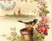 curiosity - digital scan vintage postcard bird flower printable download stamp jpg large image iron on transfer fabric transfer wall art