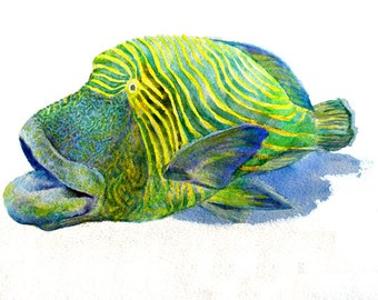 A Flurried Fish -print from original watercolor painting, Holiday present / birthday present / art collection