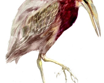 Green Heron -print from original watercolor painting, Holiday present / birthday present / art collection