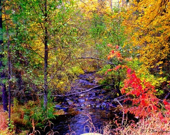 CARDS, blank cards, fall colors, photo cards, fall cards, creek, Ellen Strope, photography, digital, yellows, golds, trees, castteam