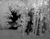 PHOTOGRAPH  FROST On WINTER Window Pane Photo, Black And White,10 x10, Maine,  Fine Art