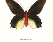 BUTTERFLY PRINT Art Original 1965 Book Plate 68 Beautiful Large FELDER Butterfly Red Summer Flower Garden Nature home decor