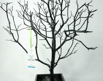"19"" Black Jewelry Tree Accessory holder / Jewelry Organizer"