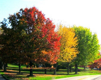"""The Many Colors of Autumn- Fine Art Photography Print 8 x 10"""""""
