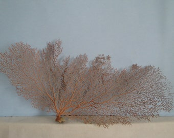 "16.5"" x 7"" Large Natural Red Color Sea Fan Seashells Reef Coral"