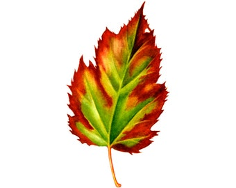 Autumn Leaf Red & Green, watercolor painting