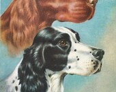 Setters Vintage Dog Illustrations - Walter A. Weber - 1940s double sided page