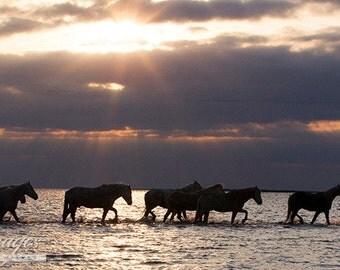 Camargue Horses at Dawn - Fine Art Horse Photograph