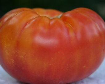 SALE Brandywine Organic Heirloom Tomato Seeds Rare