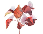 Chinese Tallowood leaves painting -nature natural - print of watercolor painting 5 by 7 print - Splodgepodge