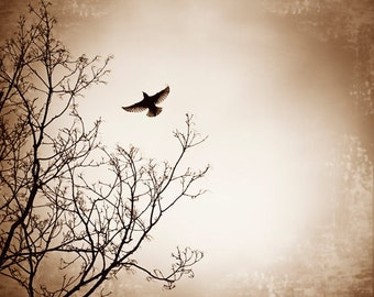 "Brown Art Print - beige bird flying photography dark black tree branch sky nature wall art white fly - 16x20, 11x14 Photograph, ""Departure"""