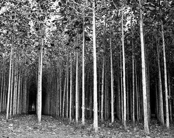 Tree Photography, Nature Photography, Tree Prints, Hiking Wall Decor, Black and White Wall Art, Abstract Art, Edge of the Forest