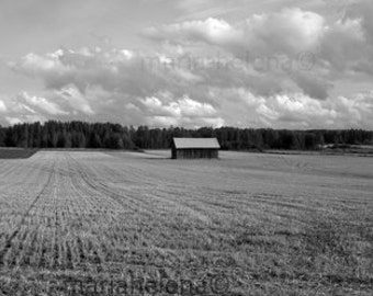field barn photo finland black and white - rural scenery black and white - countryside photo black and white -  field photo black n white