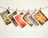 Set of 6 blank greeting photo cards, Autumn, Fall, Harvest, Pumpkins, Thanksgiving, photo note cards, - OverTheRainbowPrints