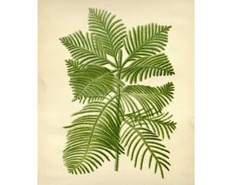Vintage Botanical Floral Leaf/Greens Series Plate 1 Digital Download: 8x10, specimens, vintage-look, printing and framing, decoupage
