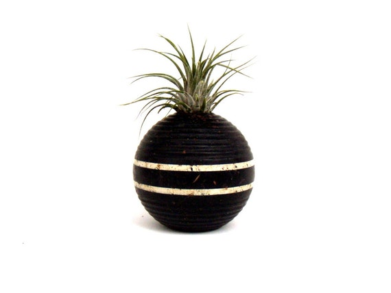 Air Plant in a Striped Black Vintage Croquet Ball Repurposed into Air Plant Holder