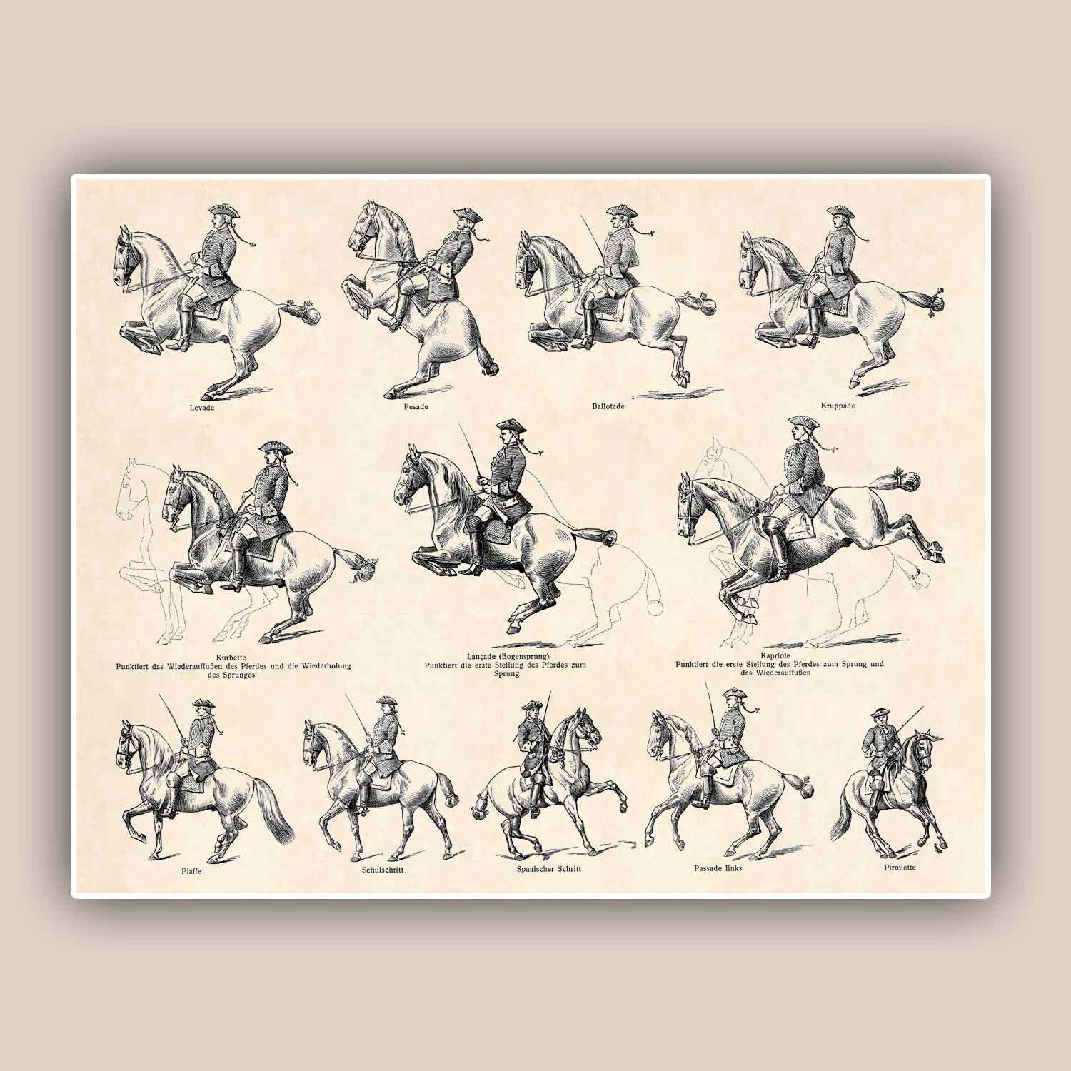 School Fabric Prints Horse Riding School Print