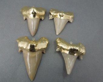 HANDMADE 24k Gold Dipped Fossil Shark Tooth Pendant -- Large Shark Tooth Pendant-- STUNNING (S3B1-05)
