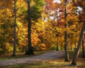 Warm, Road, Woods, Trees, Autumn, Fall, Home Decor, Yellow, Gold, Orange, Original Fine Art Photograph, 8 x 10