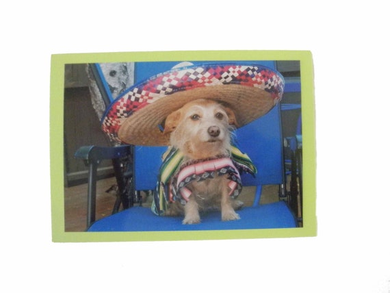 Muchas Gracias Thank You Card, Fiesta Thank You Card, Humorous Pet Thank You Card