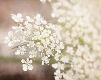 Queen Anne's Lace Fine Art Photography Macro Whimsical Flower Pink White Pastel Shabby Chic Cottage Purple Plum Summer Home Decor Wall Art