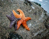 Starfish, Best Friends, Orange and Purple, Pacific Ocean 8 x 10 Photography