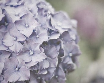 Hydrangea Photograph, Feminine Bedroom Wall Art, Pastel Purple Flower Photo, Purple and Gray Picture, 8x10 Photography