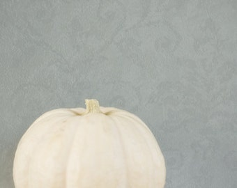 White Pumpkin Photography, Modern Halloween Wall Decor, White and Gray Kitchen Art, Minimalist Fall Picture