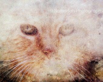 Cat fine art photography, Animal photography, abstract photograph, cat eyes, feline art, whiskers, cat lover gift idea