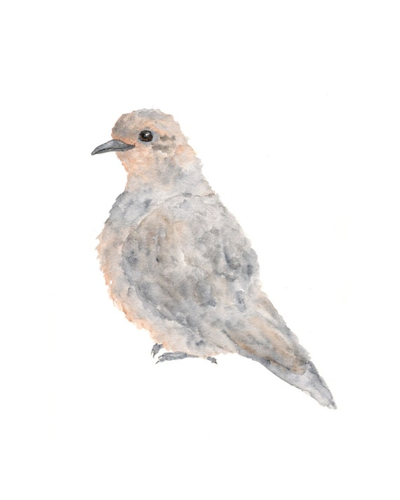bird art, bird painting, watercolor painting, grey dove, watercolor birds, turtle dove, bird print, winter painting, watercolor animal, 8X10