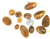 Light  Tortoise Shell  Acrylic Flatback Cabochon in Six Sizes