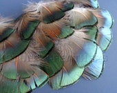 Small Golden PHEASANT feathers plumage, bronze green - for jewelry, millinery, crafts, fishing, wedding decor invitations / 24 pcs / F33-1