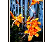 """Flower Photography Lilies - """"Fire Lilies"""" - Flowers on Fire -  8 x 10 print by PaintedEpoxy"""