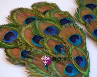 1 Peacock Feather Pad - Peacock Eyes Eye - Green Turquoise Blue Feathers - Wedding Supplies DIY Headband Hair Clip Hat - Newborn Photo Prop