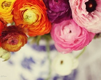ranunculus, floral, flowers, spring, colorful, fine art photography