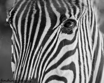 Zebra Photo, Black & White Striped Animal Face Wildlife Zoo Safari Print, Kids Minimalist African Wall Decor, Large Close-Up Art Photography